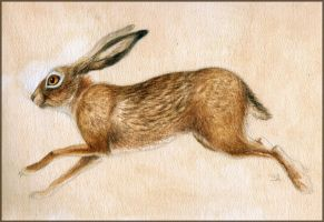 Hare by MO-ffie