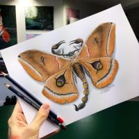 Scorpion Moth Pencil Drawing by AtomiccircuS