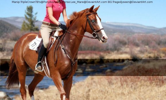 Chesnut(Horse Picture) by MollyMay335