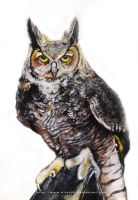 The Great Horned Owl by nilec88