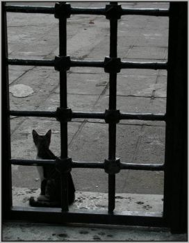 The silhouette of a cat - 2 by mustpax
