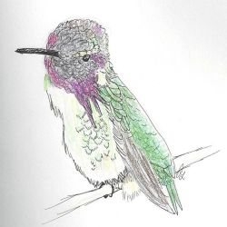 Hummingbird by Areodus