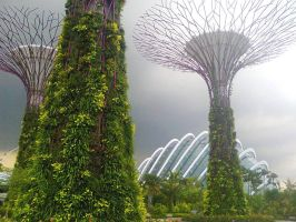 Gardens by the Bay by matmohair1