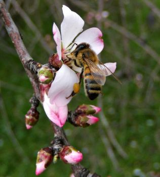spring and bee by lisans