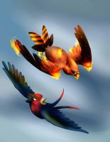 Swellow and Talonflame