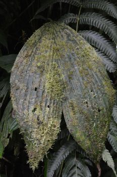Leave of subtropical vegetation with moss by A1Z2E3R