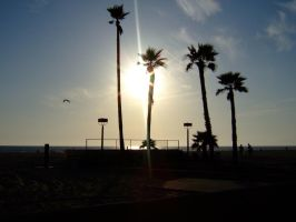 Sun and Palms at Hermosa Beach by LoveTheSilence