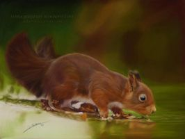 Squirrel Drawing by AmBr0