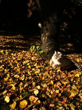 Autumn cat by Ninusqa010309