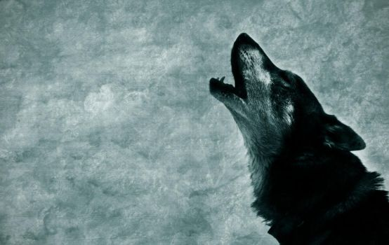 Cry of the lone wolf by Margaret-C