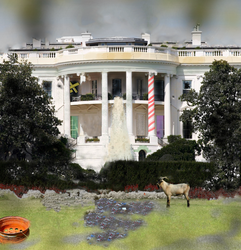 White House Gone Wild by Royce-Barber