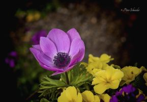 Spring bouquet. by Phototubby