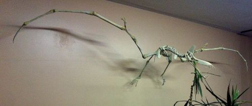 Foam restoration of a Guidraco venator (pterosaur) by helderdarocha