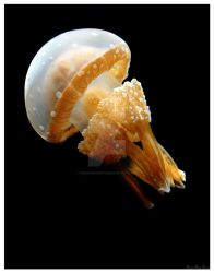 Spotted Jelly Fish by KerriAnnCrau