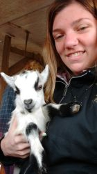 Baby Goat by itasasu4ever