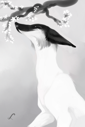 Spring sniffing by ArsFatalis