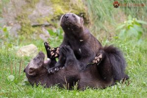 Playing wolverines. by Ravenith