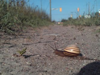 a snail on pathway by specialoftheweek