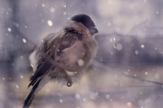 Shiver with cold by Pheonae