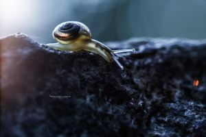 Snail Uncolored place by MohannadKassab