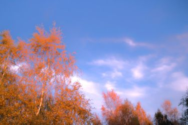 October Colors by zeropainter