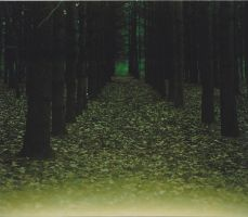 Dark Forest by thePARANOIDghost