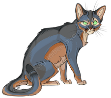 Blue Abyssinian + Video by Gato-Iberico