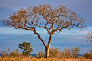 Kruger Scenery I - Exclusive HDR by boldfrontiers