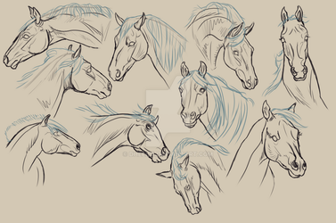 Study - Horse heads by Dheelis