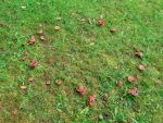 fairy ring by Mittelfranke