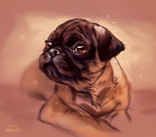 Pug`s puppy by AlaxendrA