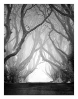 The Black Hedges by Klarens-photography