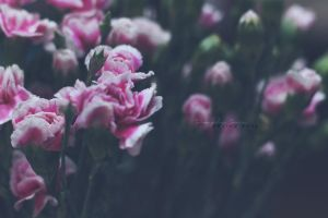 Happiness blooms from within by simplysuzu