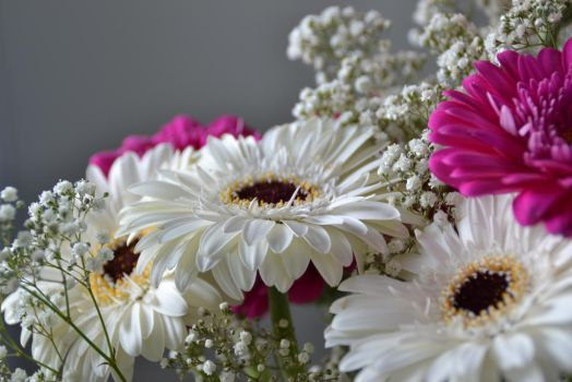 Gerbera flower by Cataqi