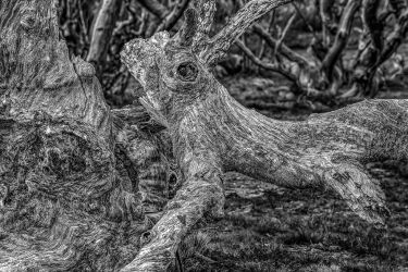 Twisted by MarkLucey