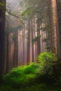 Siuslaw Forest by little-spacey