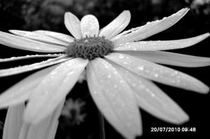 The Dew Flower. by CharcoalRainbow