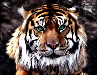 Tiger Portrait by allison731