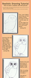 Realistic Drawing Tutorial by annoKat