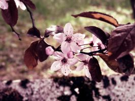 Quand vient le Printemps.. by Behind--the-lens