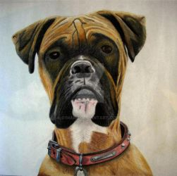 boxer dog by 01mark