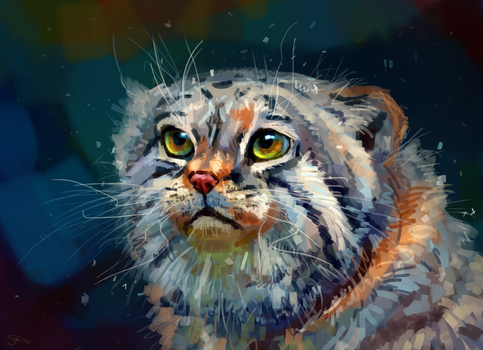 Pallas's cat by AlaxendrA