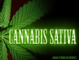Cannabis Sativa by Poisongage