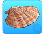 Scallop by IsomaraIndex