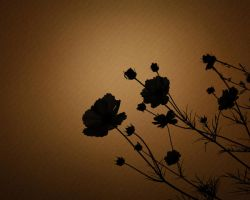 Nature Silhouette Poppies by magaxion
