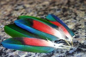 Feather Study by Slaneyder