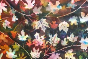 Maple Leaves  by swiftcross