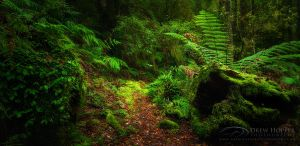 Majestic Lushness by DrewHopper