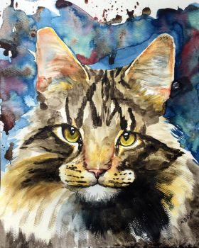 Maine coon cat by Kajko