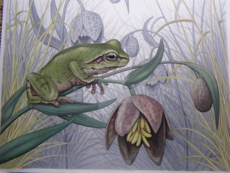 Pacific tree frog, Chocolate lily by Towinckdesigns